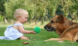 Dogs may protect babies from some infections: study