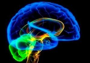 Brain: Making sense of what we see