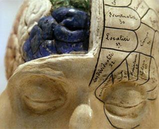 3D tissue lets US scientists study brain injury