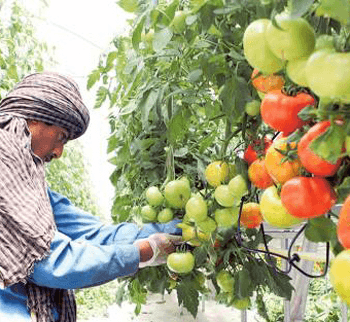 Gulf nations need to step up efforts to meet food demand
