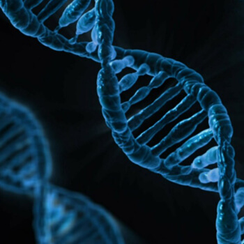 Google Genomics adds Broad Institute's DNA analysis toolkit