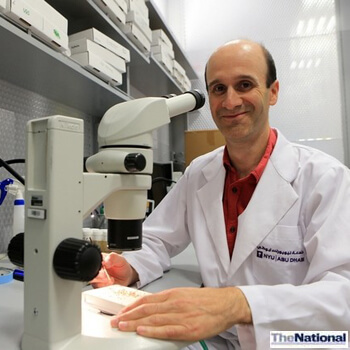 Abu Dhabi fruit fly study could shed light on humans' body clock cycle