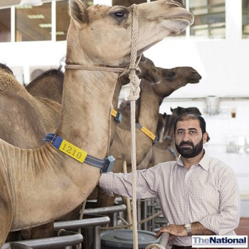 Al Ain doctor sees potential in camels beyond their milk
