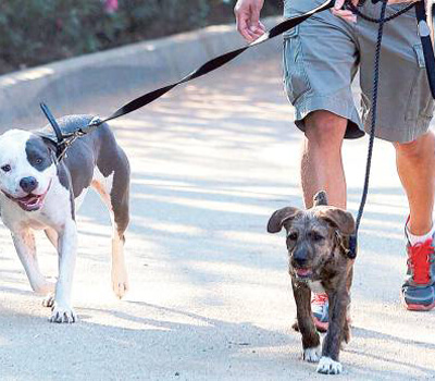 8 cases of dogs with parvo virus confirmed in UAE